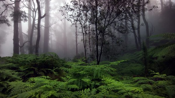 wallpaper-forest-HD2-600x338