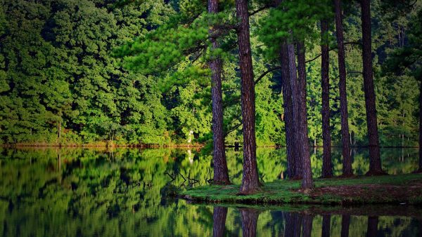 wallpaper-forest-HD3-600x338