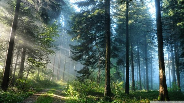 wallpaper-forest-HD4-600x338