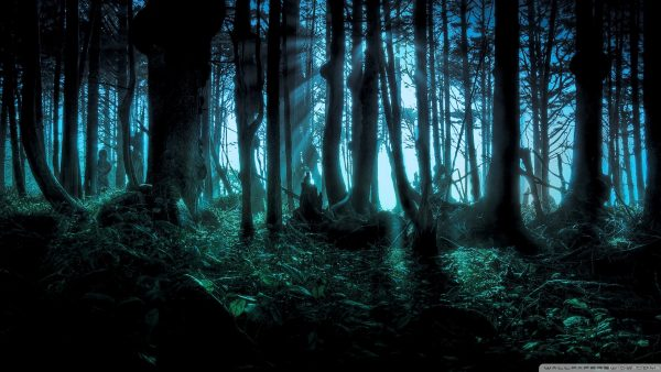 wallpaper-forest-HD5-600x338