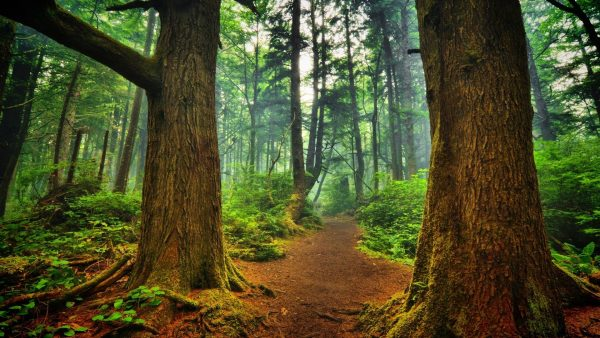 wallpaper-forest-HD6-600x338