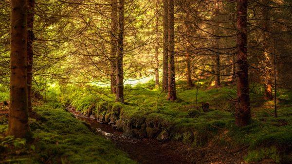 woods-wallpaper1-600x338