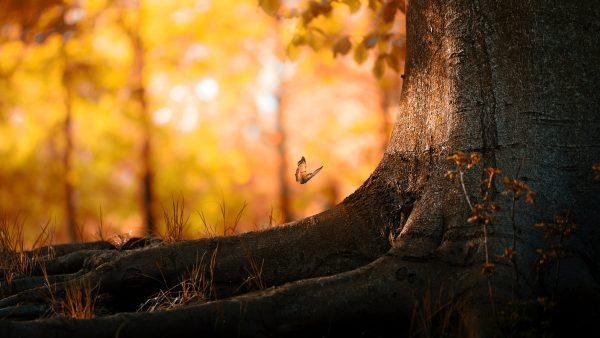 woods-wallpaper8-600x338