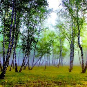 birch-bark-wallpaper-HD2-300x300