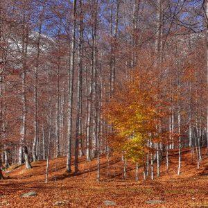 birch-bark-wallpaper-HD4-300x300