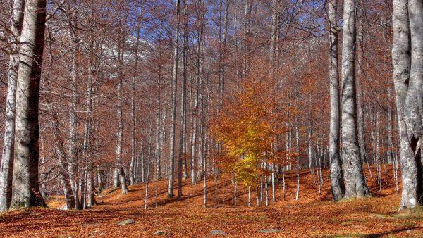 birch-bark-wallpaper-HD4-600x338