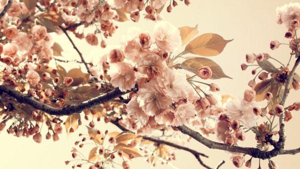 cute-vintage-wallpaper-HD1-600x338