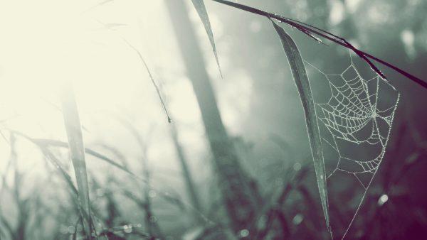 spider-web-wallpaper-HD3-600x338