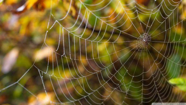 spider-web-wallpaper-HD5-600x338