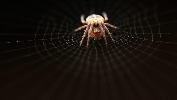 spider-web-wallpaper-HD6-600x338