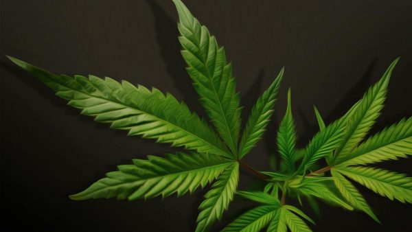 weed-wallpaper-for-iphone-HD3-600x338