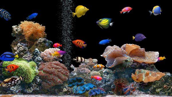 coral-wallpaper-600x338