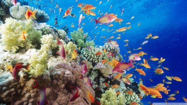 coral-wallpaper1-600x338