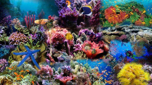 coral-wallpaper3-600x338