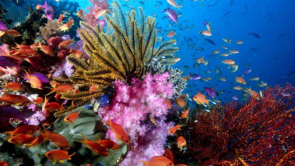 coral-wallpaper5-600x338