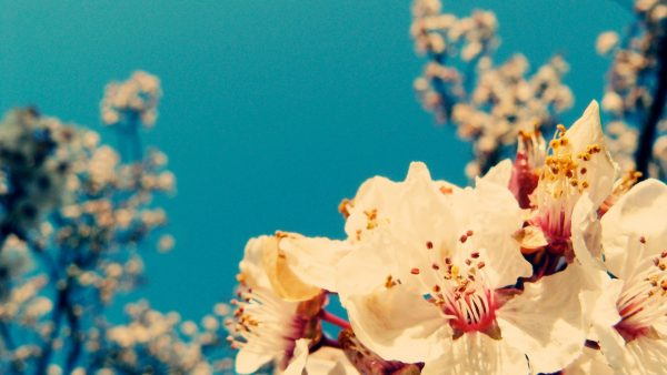 vintage-flower-wallpaper10-600x338