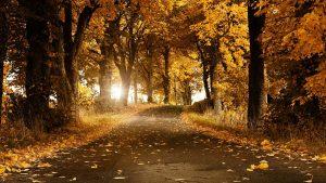 automne fond d'écran hd