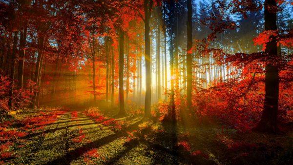 autumn-hd-wallpaper9-600x338