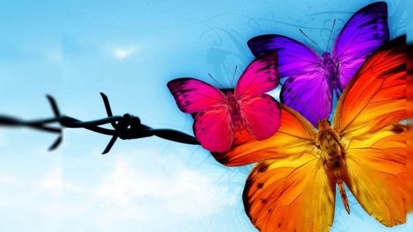 butterfly-wallpaper-for-android2-600x338