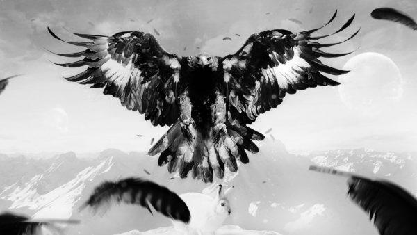eagles-logo-wallpaper4-600x338