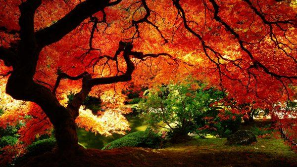 fall-season-wallpapers1-600x338