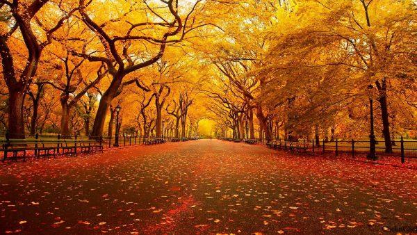 fall-season-wallpapers4-600x338