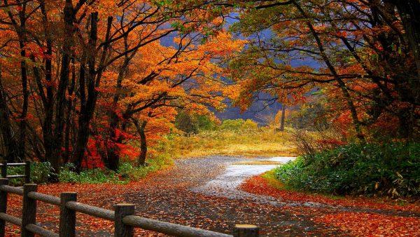 fall-season-wallpapers5-600x338