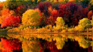 fall seizoen wallpapers