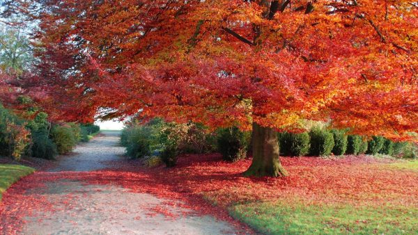 fall-season-wallpapers9-600x338