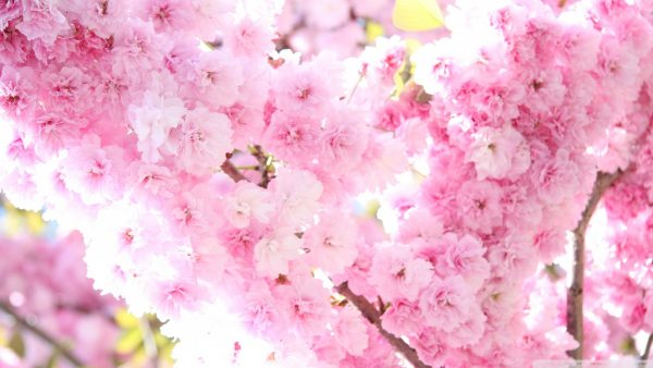 flowered-wallpaper10-600x338