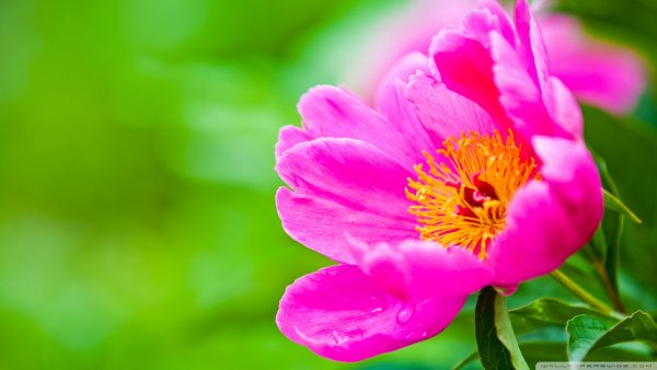flowered-wallpaper9-600x338
