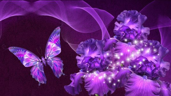 purple-butterfly-wallpaper1-600x338