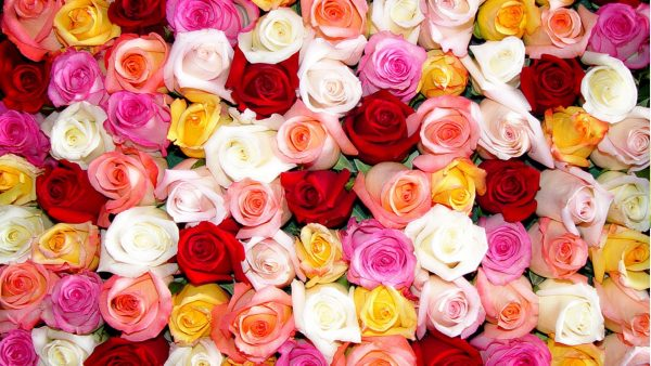 roses-wallpaper-tumblr2-600x338