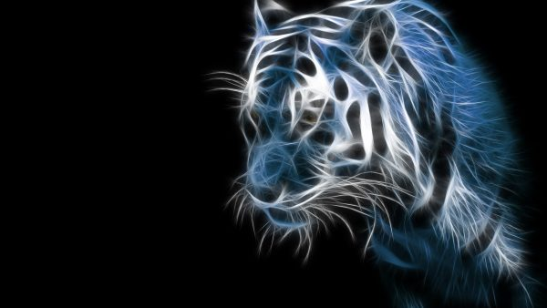 tiger-hd-wallpaper-600x338
