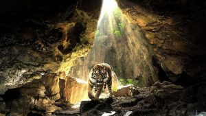 harimau hd wallpaper