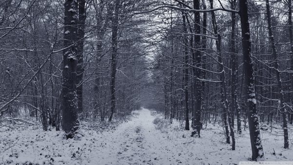 winter-forest-wallpaper2-600x338
