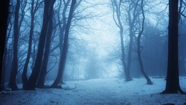 winter-forest-wallpaper3-600x338