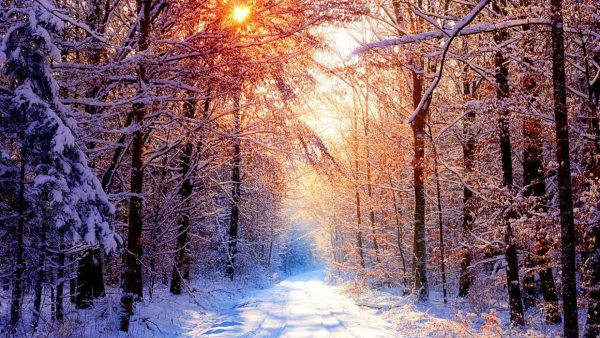 winter-forest-wallpaper9-600x338