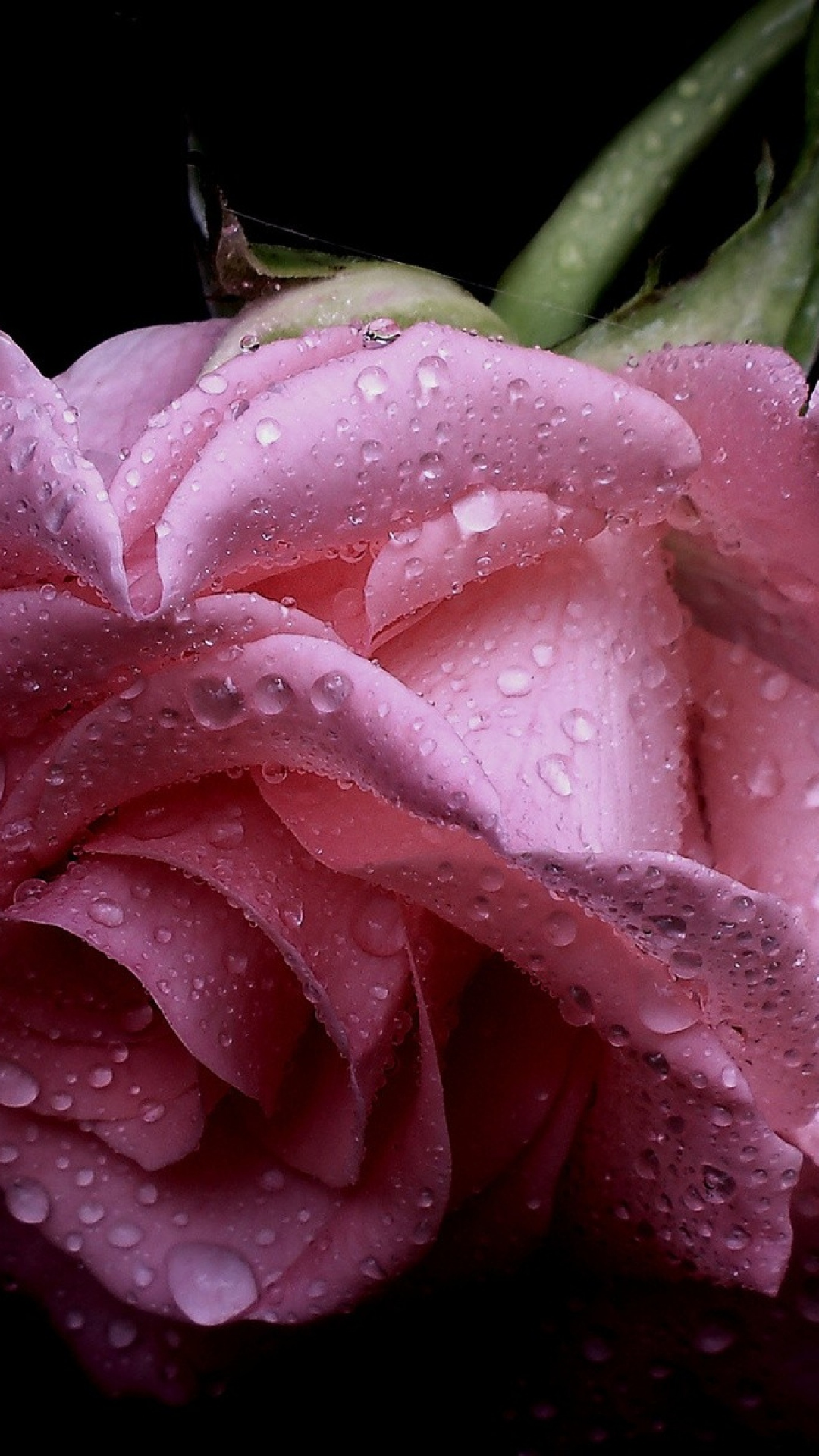 1080x1920-rose-flower-drops-petals-wallpaper-wp340623