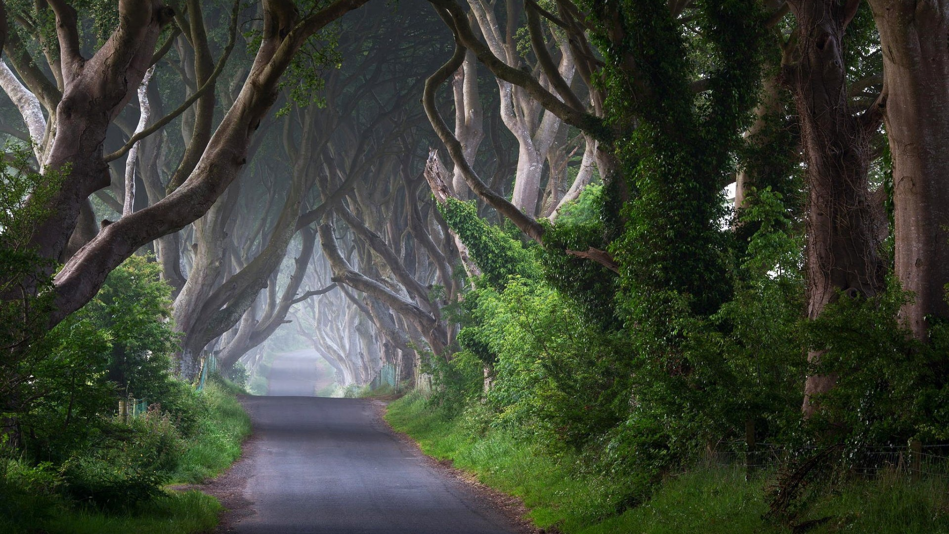 1920x1080-Trees-Road-Trunk-Plant-Ireland-wallpaper-wp340913