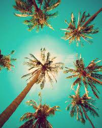 3dbbadfaf-palm-trees-beach-tree-wallpaper-wp340676