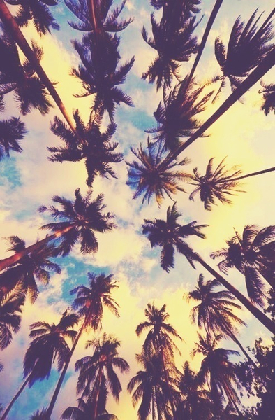 A-sky-full-of-Palm-trees-wallpaper-wp3002921