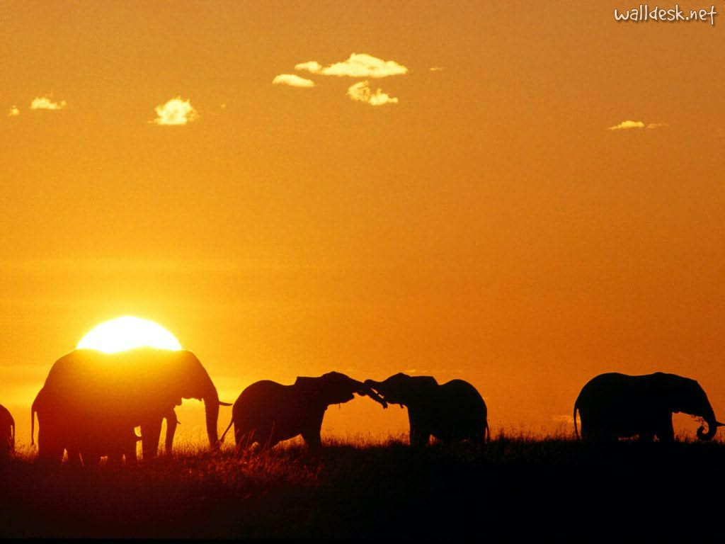 Africa-top-images-wallpaper-wp3001018