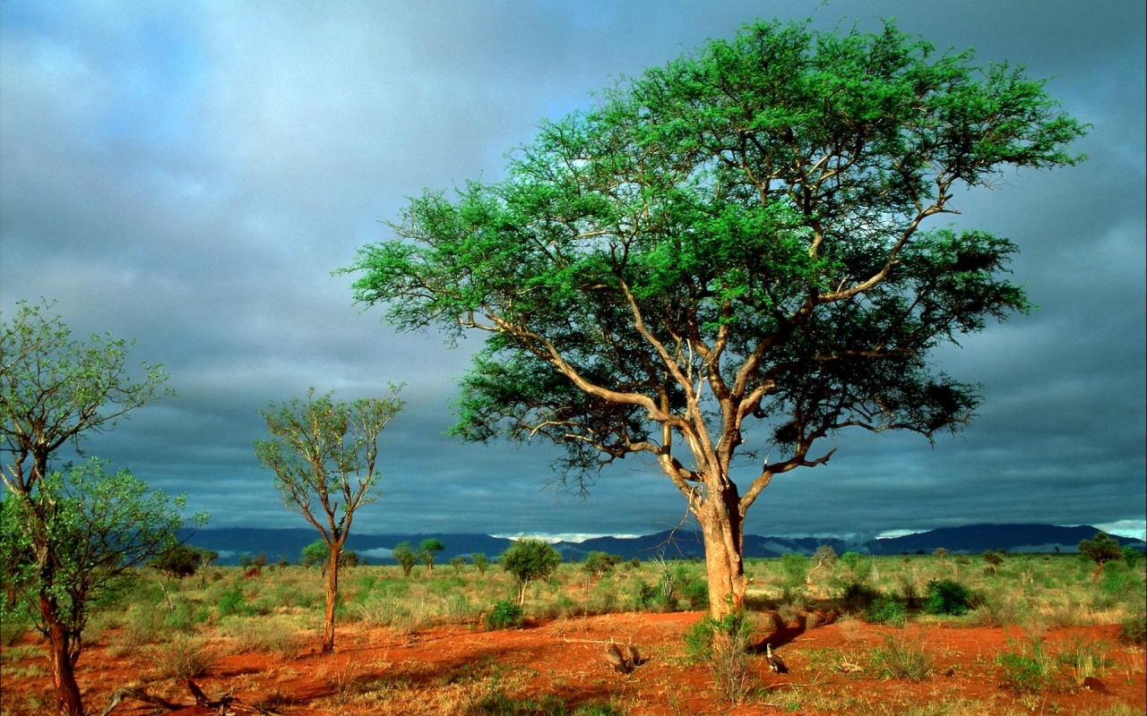 Africa-top-images-wallpaper-wp3001342