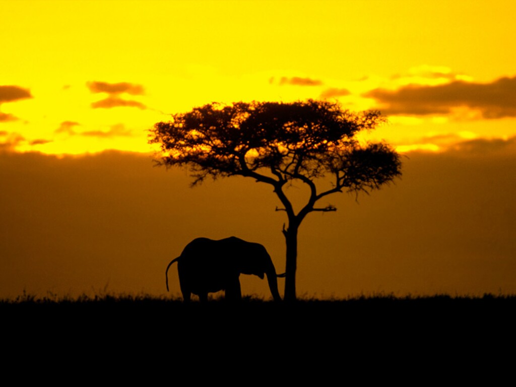 Africa-top-images-wallpaper-wp3003027