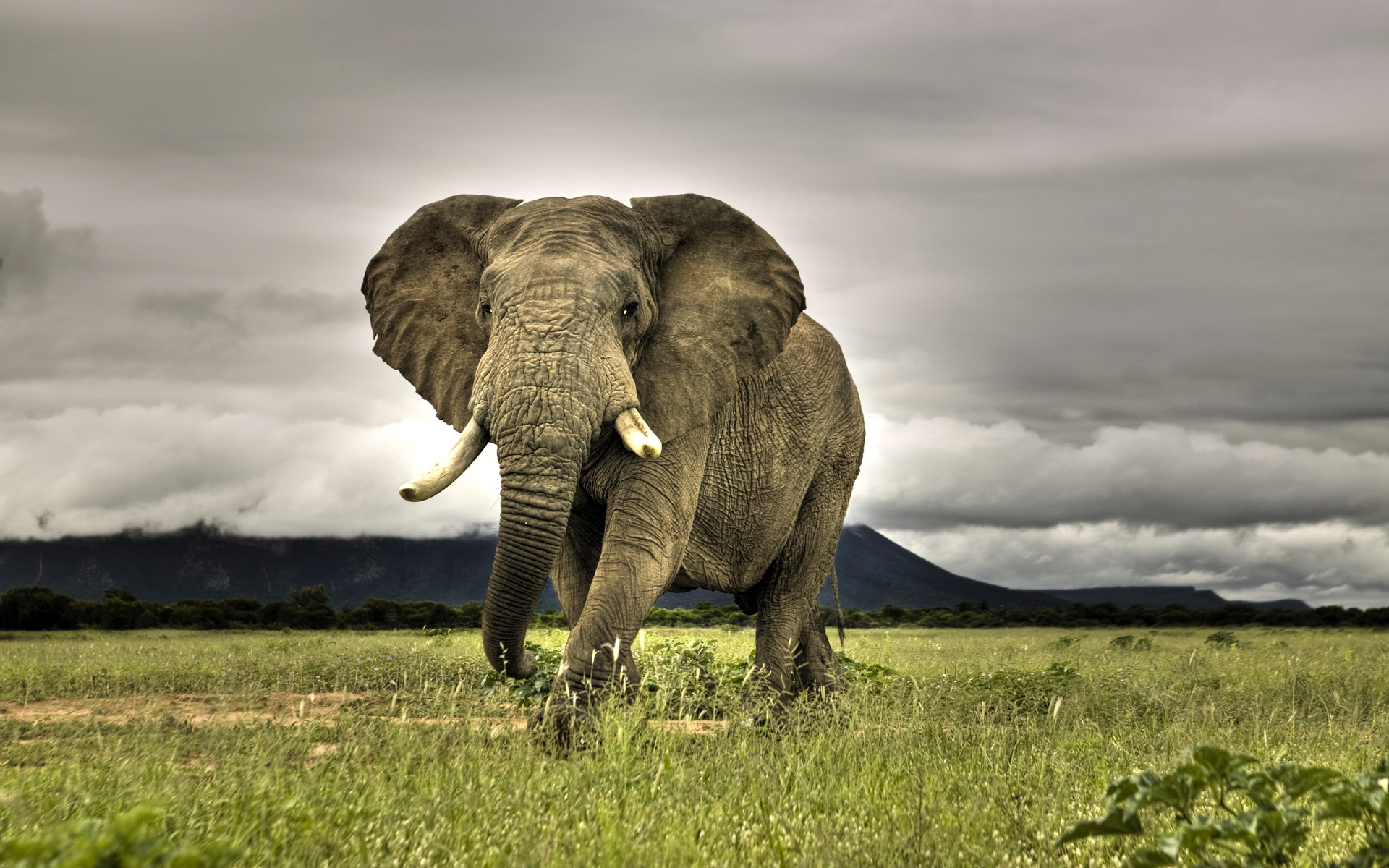 Africa-top-images-wallpaper-wp300605