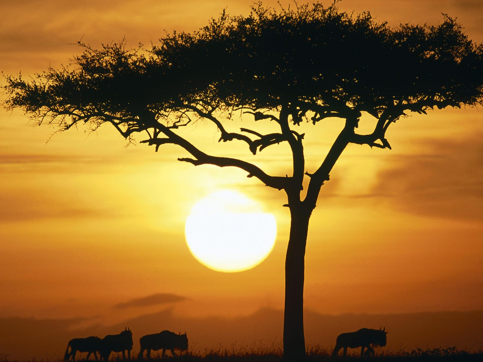 Africa-top-images-wallpaper-wp300838