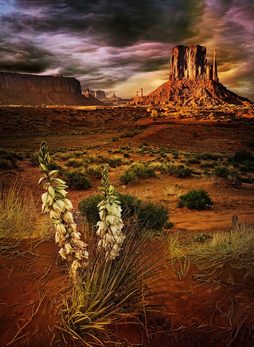 Agave-Plant-Mesas-Southwest-Desert-USA-Most-Beautiful-Pages-wallpaper-wp4404259