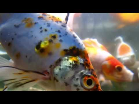 Alaruine-see-what-s-new-today-Relaxing-sound-fish-tank-how-to-make-an-design-aquarium-with-wallpaper-wp3402240