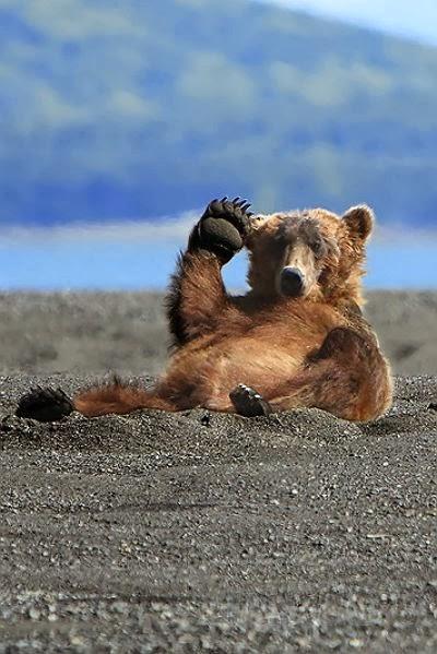 Alaskan-Coastal-Brown-Bear-says-hello-by-Alan-Vernon-wallpaper-wp4603545-1